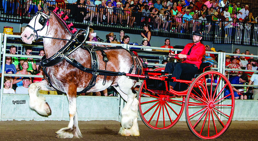 Forty Clydesdales reside at Alamar Acres and Gregglea Farms, Knobloch's breeding partners in Ontario, Canada. Between the two operations, known collectively as Gregglea Alamar Clydesdales, they have been consistent winners in the show arena.