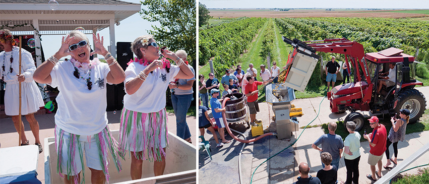 Left: Patrons enjoying Mackinaw Valley Vineyard and Winery Right: White grapes undergo crushing and destemming prior to being pressed.