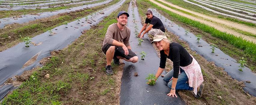 Vicki ImOberstag with sons Luke and Paul ImOberstag planting the last of 7,000 seedlings by hand