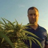 Hemp farmer Jason Jones of Graymont, Illinois